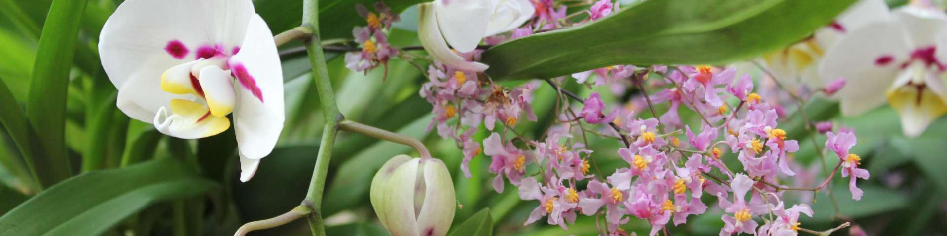 Orchideengärtner