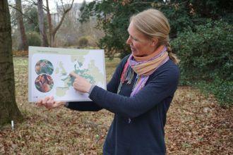 Führung zum Thema Wildpflanzenschutz im Botanischen Garten